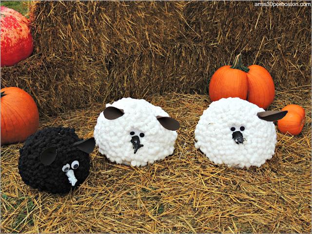 Calabazas Decoradas para Halloween: Ovejas