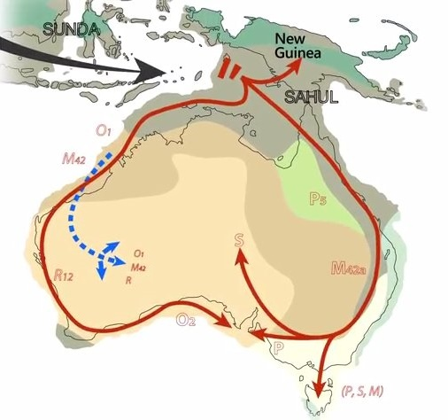 Aboriginal hair shows 50,000 year connection to Australia