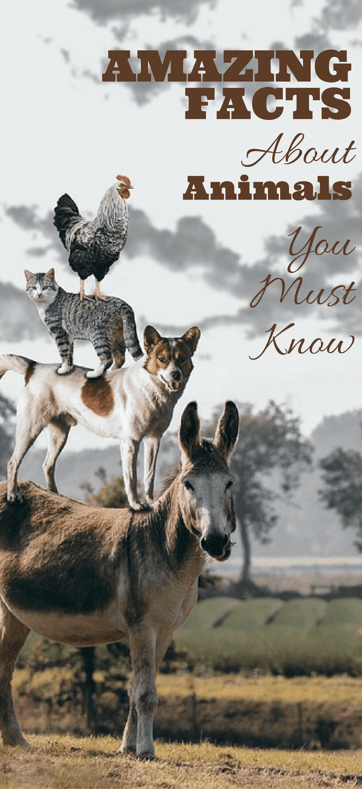 Some Amazing Facts About Animals You Must Know, Really Surprised