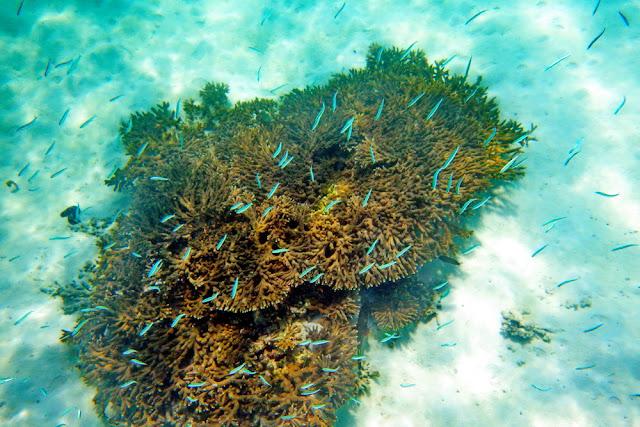 snorkeling, schnorcheln, daymaniyat, islands, inseln, fische, oman, Muscat, unterwasser, meer