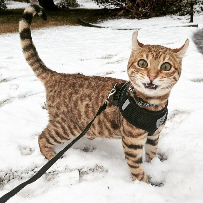 cat ear pointing upwards when his first time with the snow