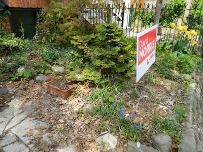 Cabbagetown Toronto Spring Front Garden Cleanup Before by Paul Jung Gardening Services a Toronto Gardening Company