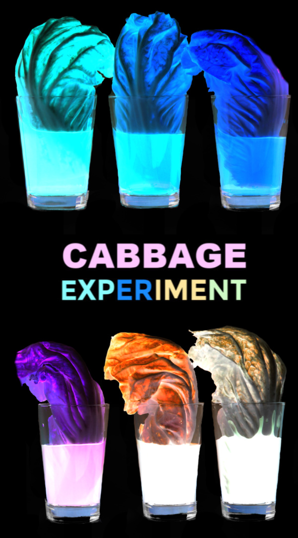 Can you make cabbage glow?  Find out with this super cool science experiment for kids!  #glowingcabbageexperiment #glowingexperiments #glowingscienceexperiments #cabbageexperiment #cabbagesciencefairproject #lettucescience #scienceexperimentskids #scienceforkids #growingajeweledrose