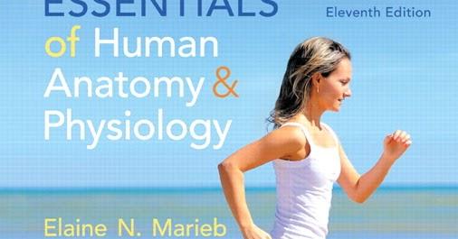 Human essentials anatomy marieb physiology pdf and of