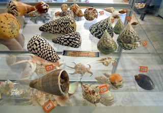 Μουσείο Φυσικής Ιστορίας στην Απείραθνο