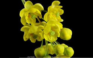 http://fotobabij.blogspot.com/2015/03/berberys-zwyczajny-kwiaty-berberis_4.html