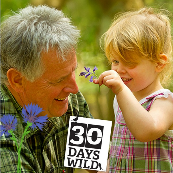 #30DaysWild wih the Devon Wildlife Trust