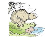 Dongeng Anak | Dongeng Beruang dan Lebah (Aesop)