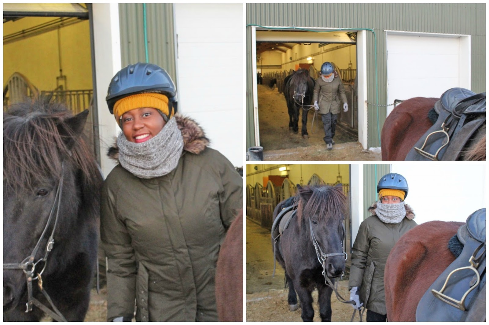 making restorations blog Icelandic ponies