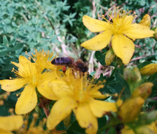 Bijenwas