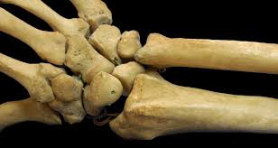 foods and nutrients for healthy bones