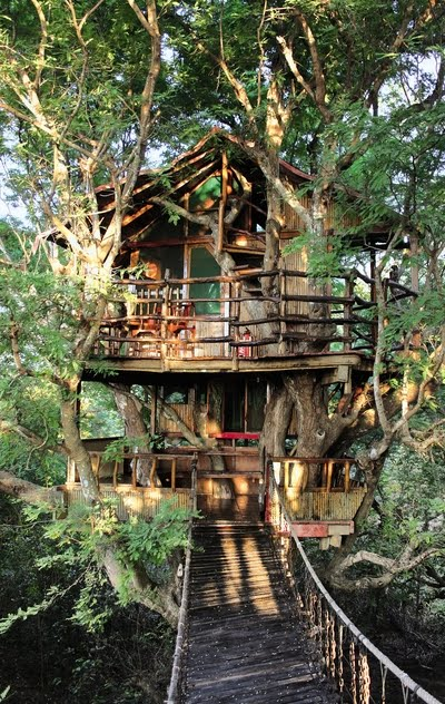 Living Wood Tree House Moon To Moon Awesome Tree Houses