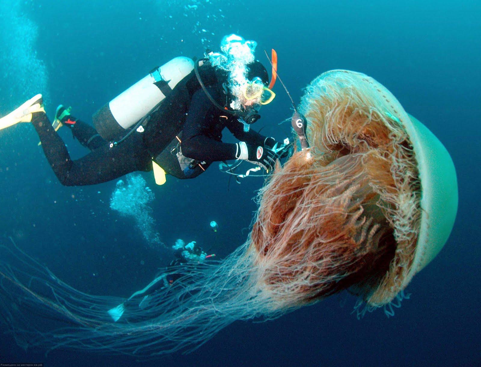 Dünyanın En Büyük Deniz Atı resimleri