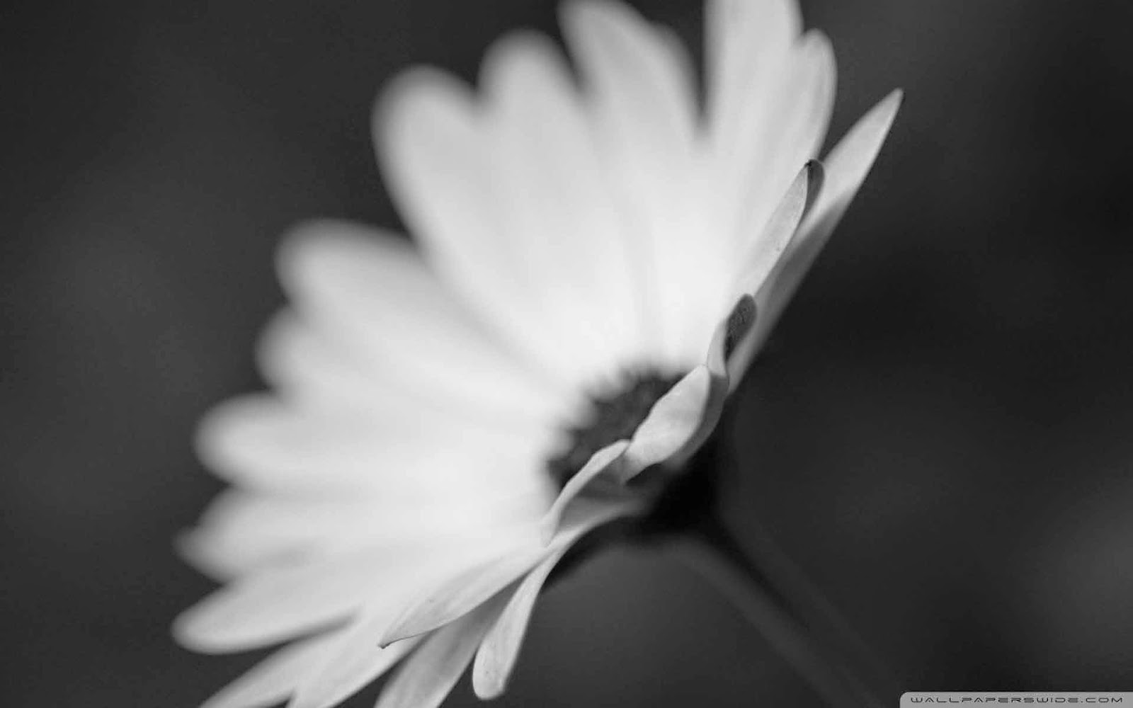 flower monochrome wallpaper