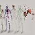 Sistemas estudados na Anatomia