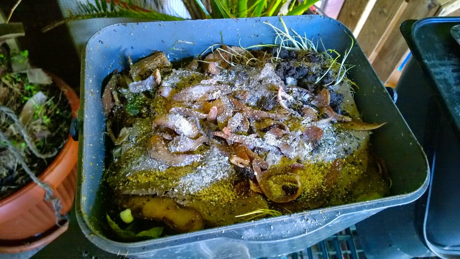 Wurmkiste gefüllt mit Bioabfällen (c) by Joachim Wenk