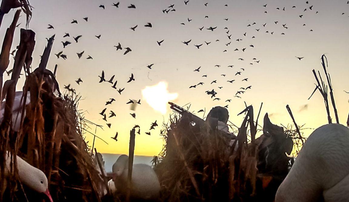 Waterfowl Hunting Videos Duckgoose