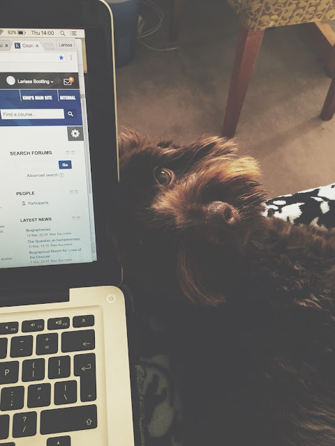 blogging with my dog