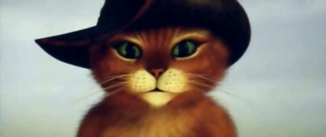 Kot W Butach Ciut Więcej