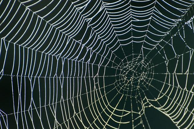 Spider Web, FM 660, Ennis
