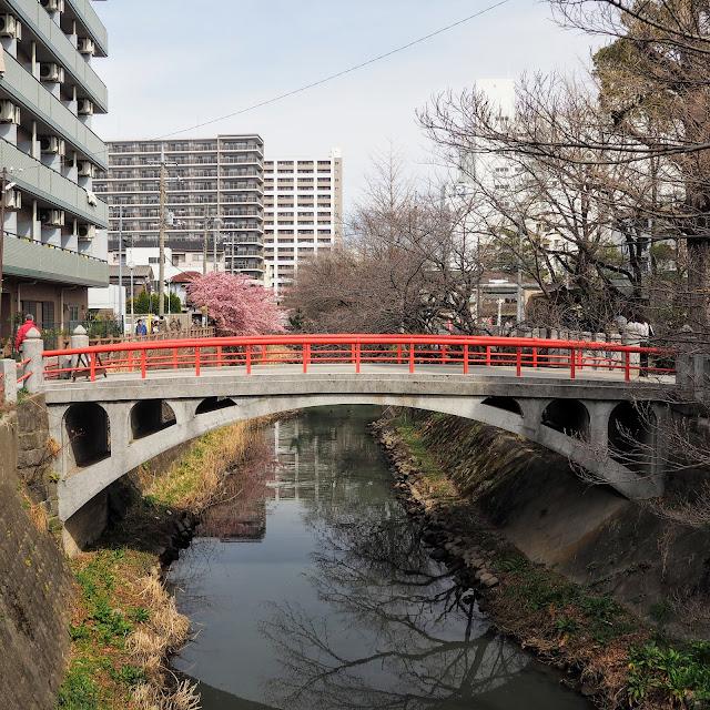 松戸 坂川 松戸神社