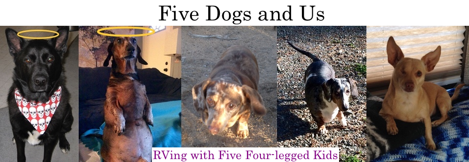 Five Dogs and Us