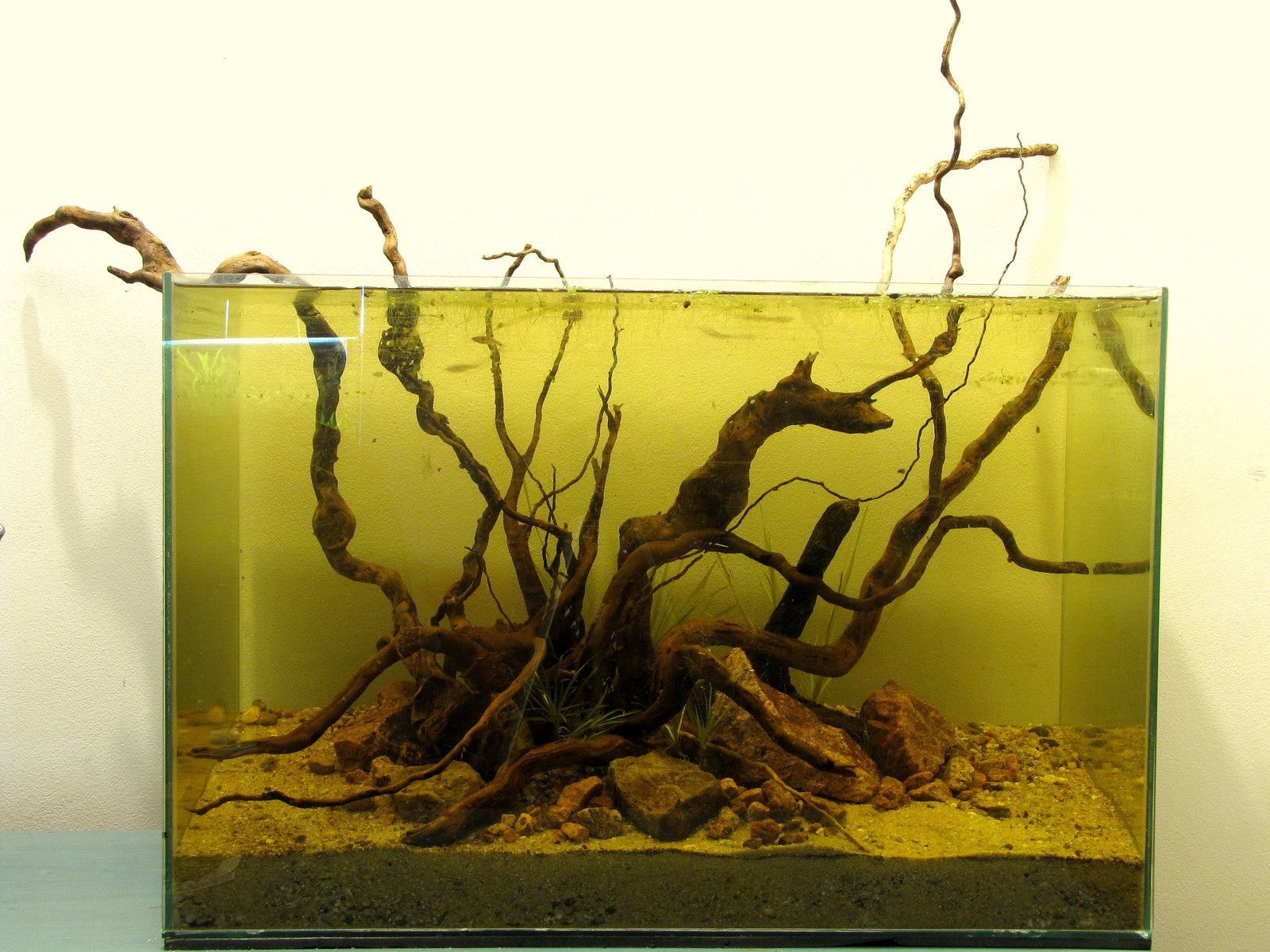 Borko's hobbies: Mizube biotope / aquascape