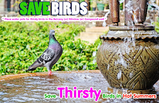 Save Thirsty Birds in Hot Summers