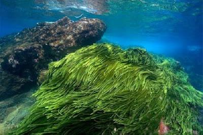 Tảo là thực vật sống ở biển