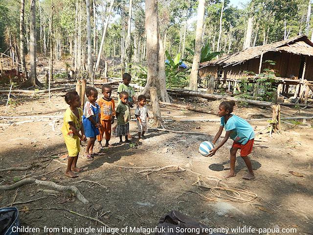 Traveling to rainforest of Sorong regency