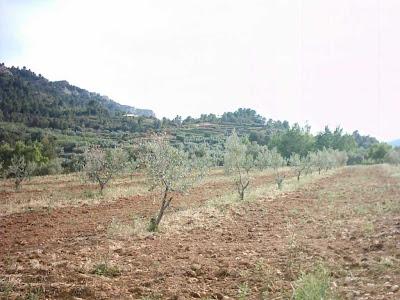 La pileta, camino, pantano de Pena, embalse, finca, almendros, olivos 14