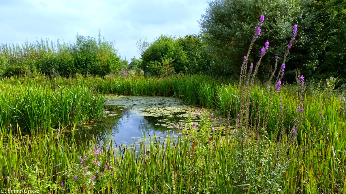 Barnes Wildfowl and Wetlands Centre