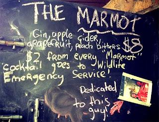 Wildlife Emergency Services blog: Elusive marmot captured