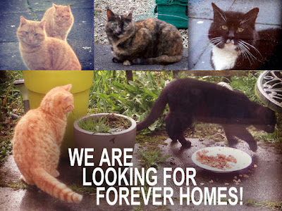 Looking for safe and loving forever home/s for the Drumree cats