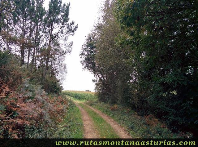 Ruta Das Minas PR AS-182: saliendo del bosque