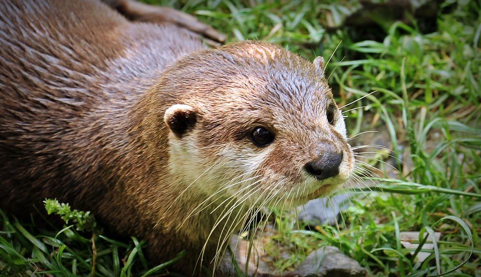 Material zur Aktivierung und Beschäftigung: Worte die Otter beinhalten
