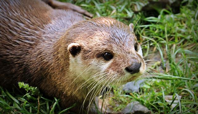 Worte die Otter beinhalten, Wörterliste Otter, Worte mit Otter, Seniorenarbeit, Aktivierungsideen, Beschäftigung