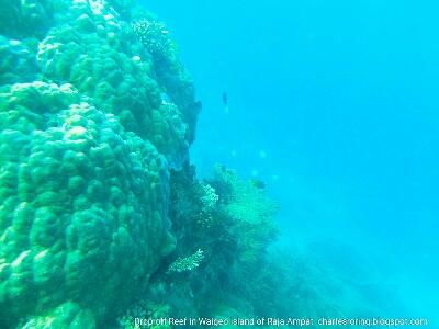 Drop off reef in Waigeo island of Raja Ampat