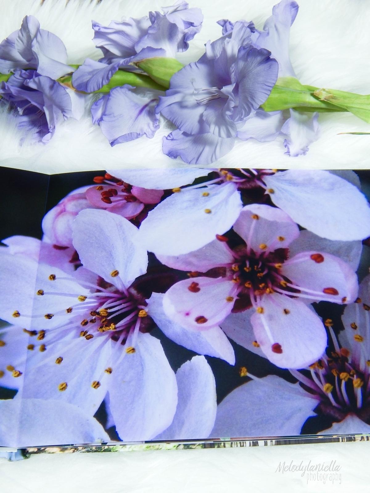 saal digital fotoksiązka recenzja melodylaniella blog pomysl na prezent fotografia fotograficzne prezenty .JPG melodylaniella photography