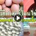 วิธีทำฮอร์โมนไข่ เร่งดอกเร่งผล ผสมอาหารเลี้ยงสัตว์