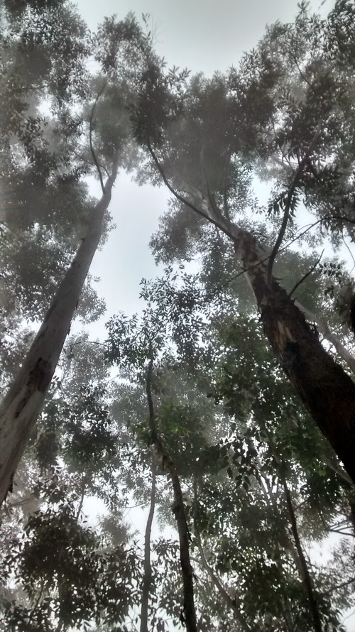 mist and trees in munnar