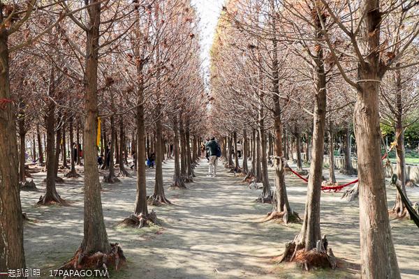 中科落羽松是網美必訪景點,園區平坦又有設置公園椅,美照好好拍