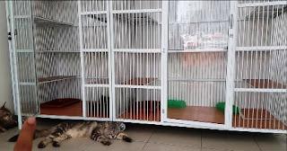 Daftar Harga Kandang Kucing Persia Terbaru