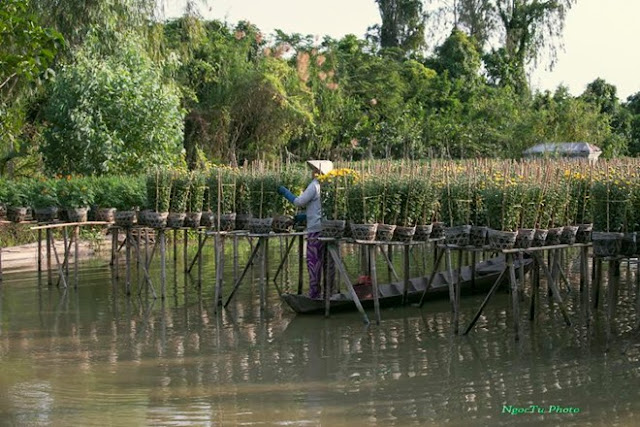 Sa Dec Flower Gardens in Mekong delta, Vietnam 9