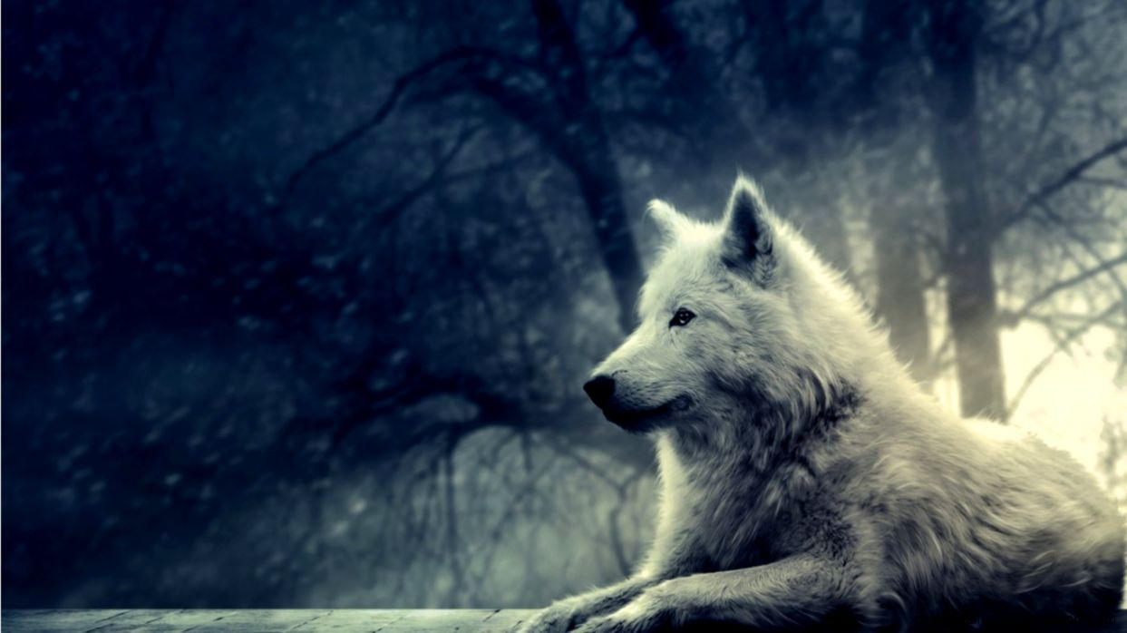 Anime Wolf Wallpaper Hd