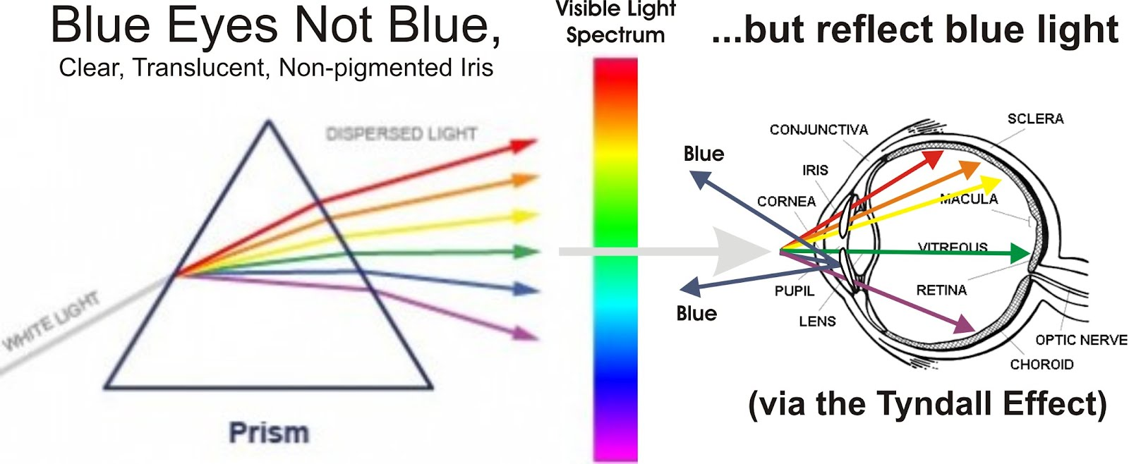 small resolution of acting white acting black blue eyes not really blue the tyndall effect snake eye diagram blue eye diagram
