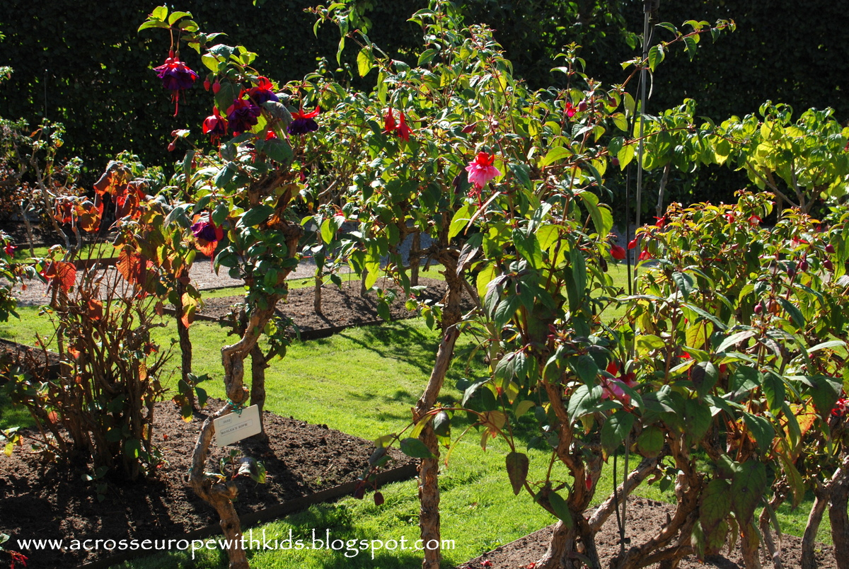 Fuchsia Garden at Egeskov