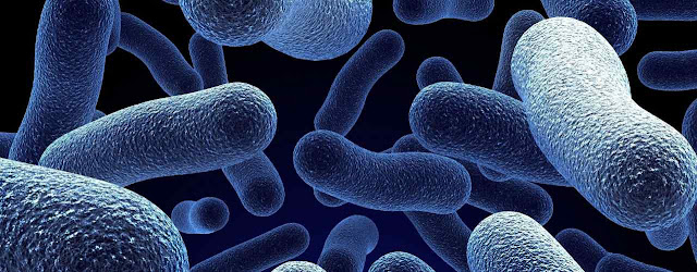 Microorganismos y biologia