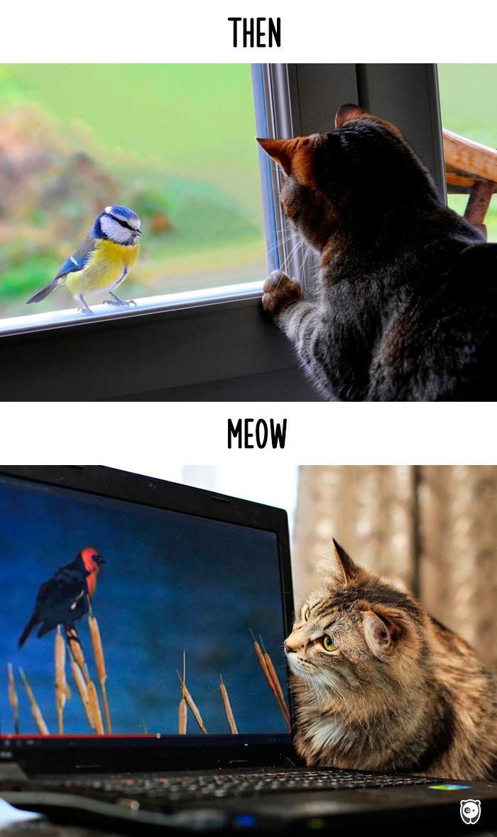 Then vs Meow How Technology Has Changed Cats' Lives (10+ Pics) - Bird Watching