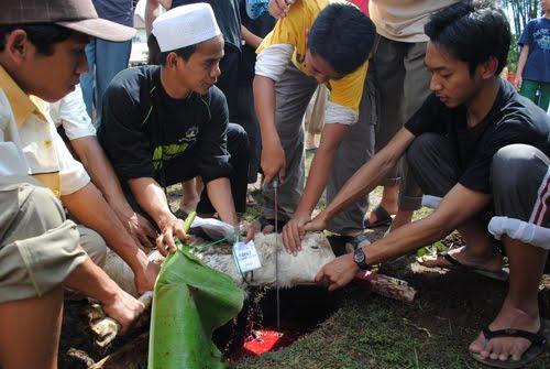 Memotong Hewan Qurban